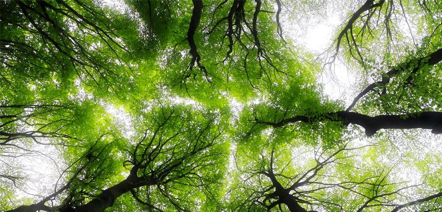 Article Marcher avec les arbres Magazine Heartfulness