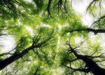 Blog Marcher avec les arbres Magazine Heartfulness